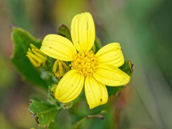 Mystery-flower-4.jpeg