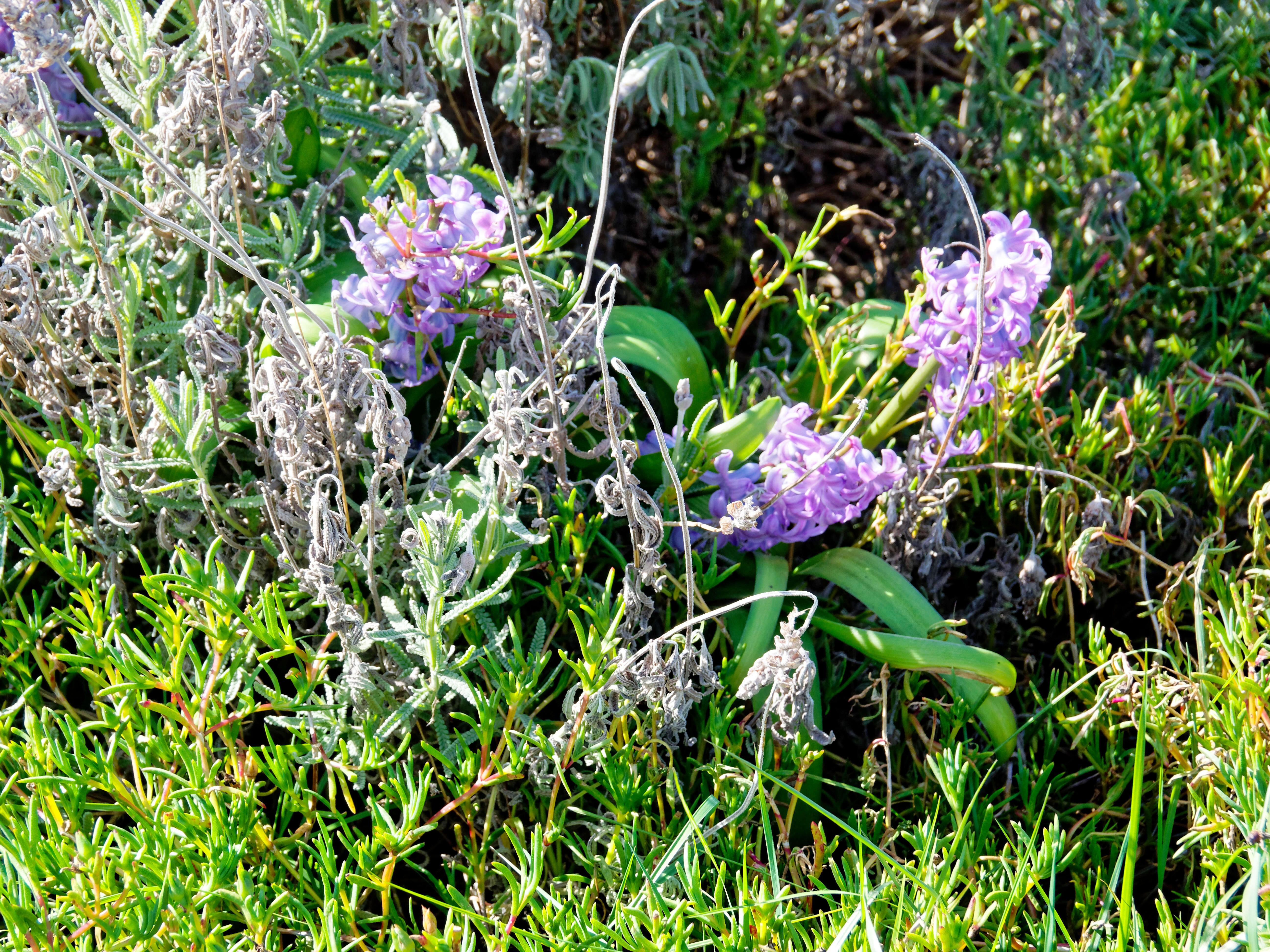Garden-flowers-5.jpeg