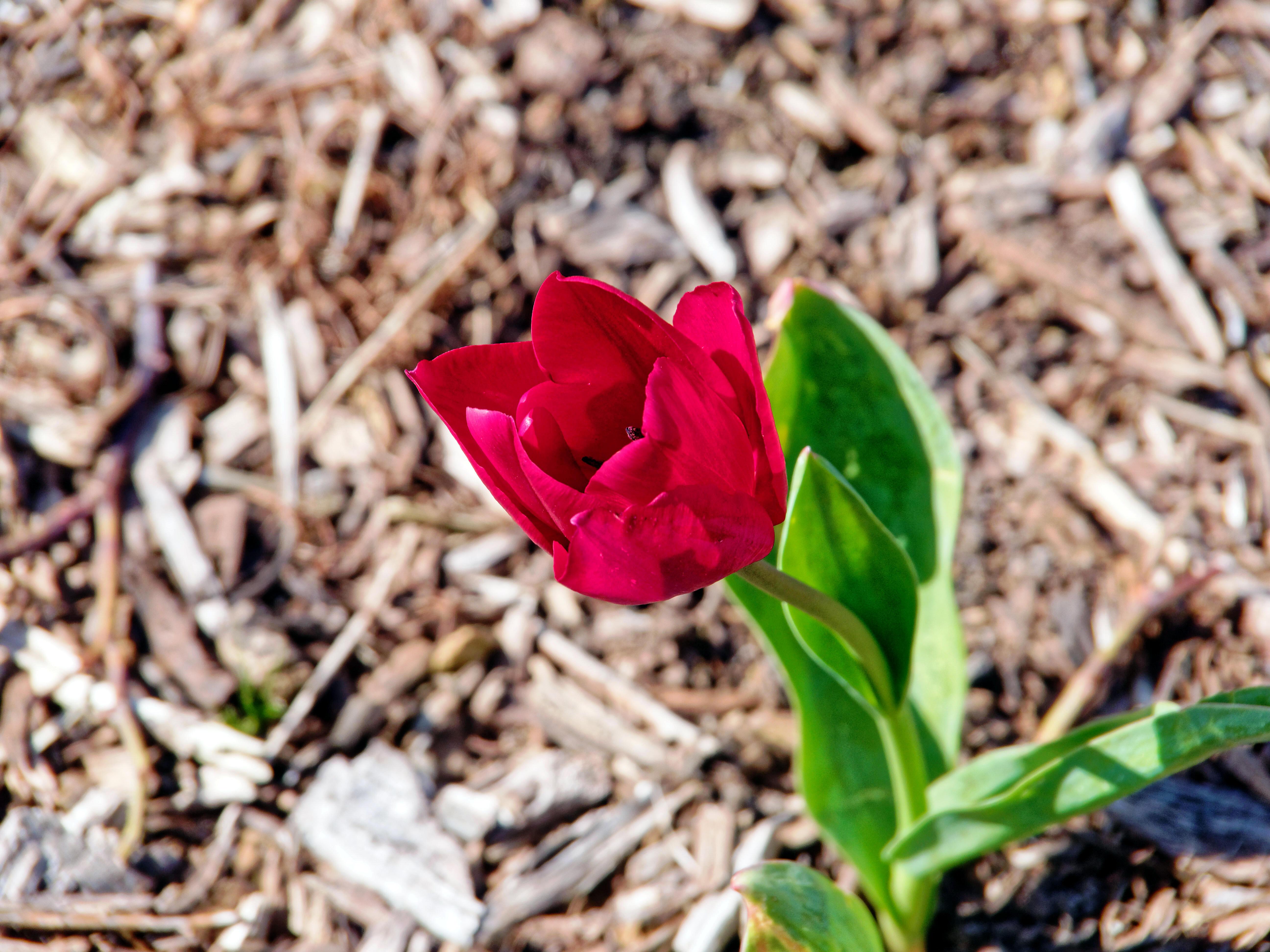 Garden-flowers-6.jpeg
