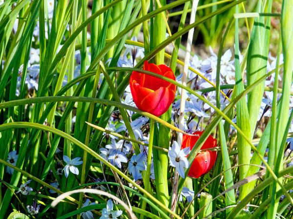 Garden-flowers-3.jpeg