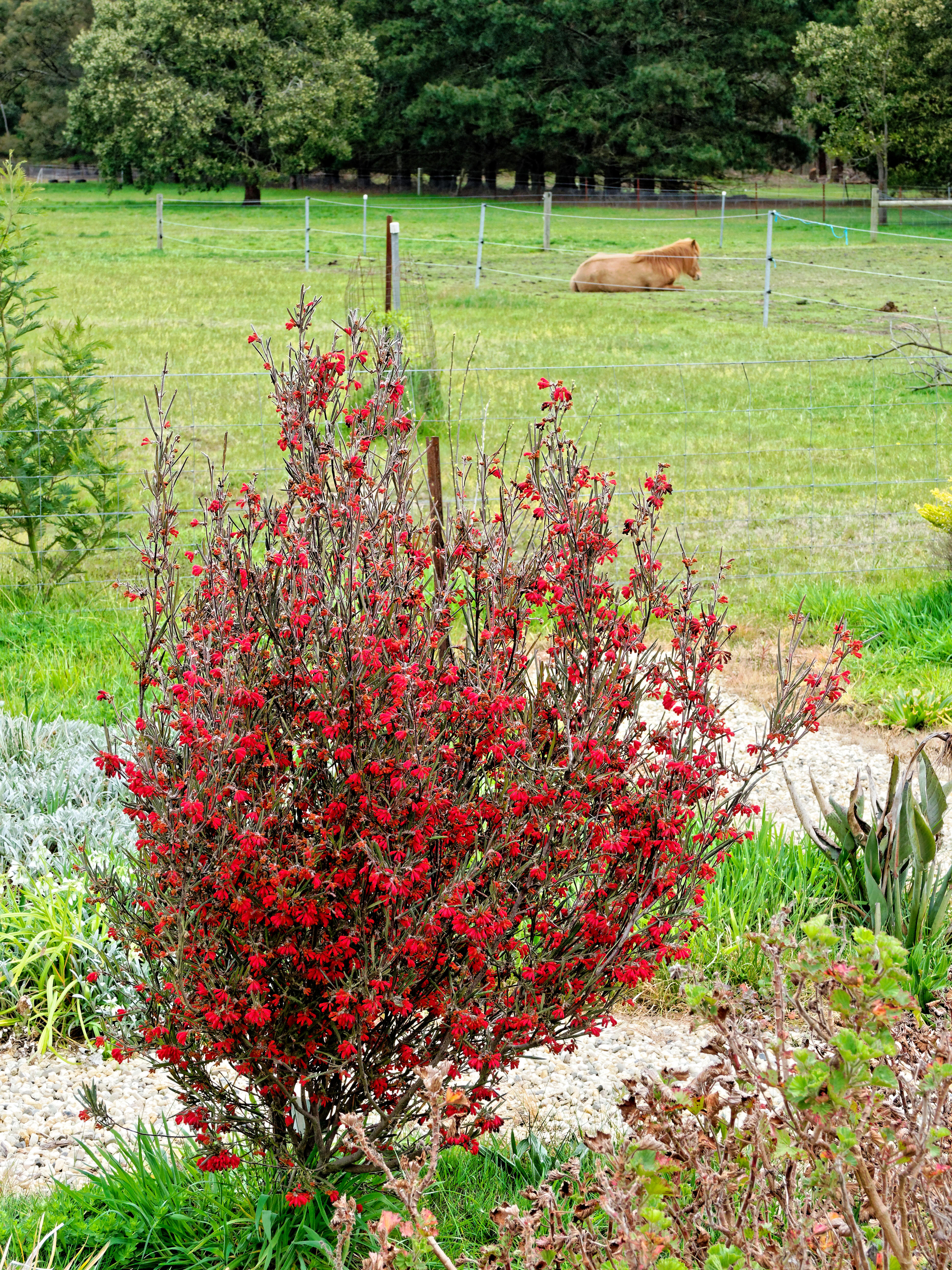 This should be Grevillea-1.jpeg.  Is it missing?