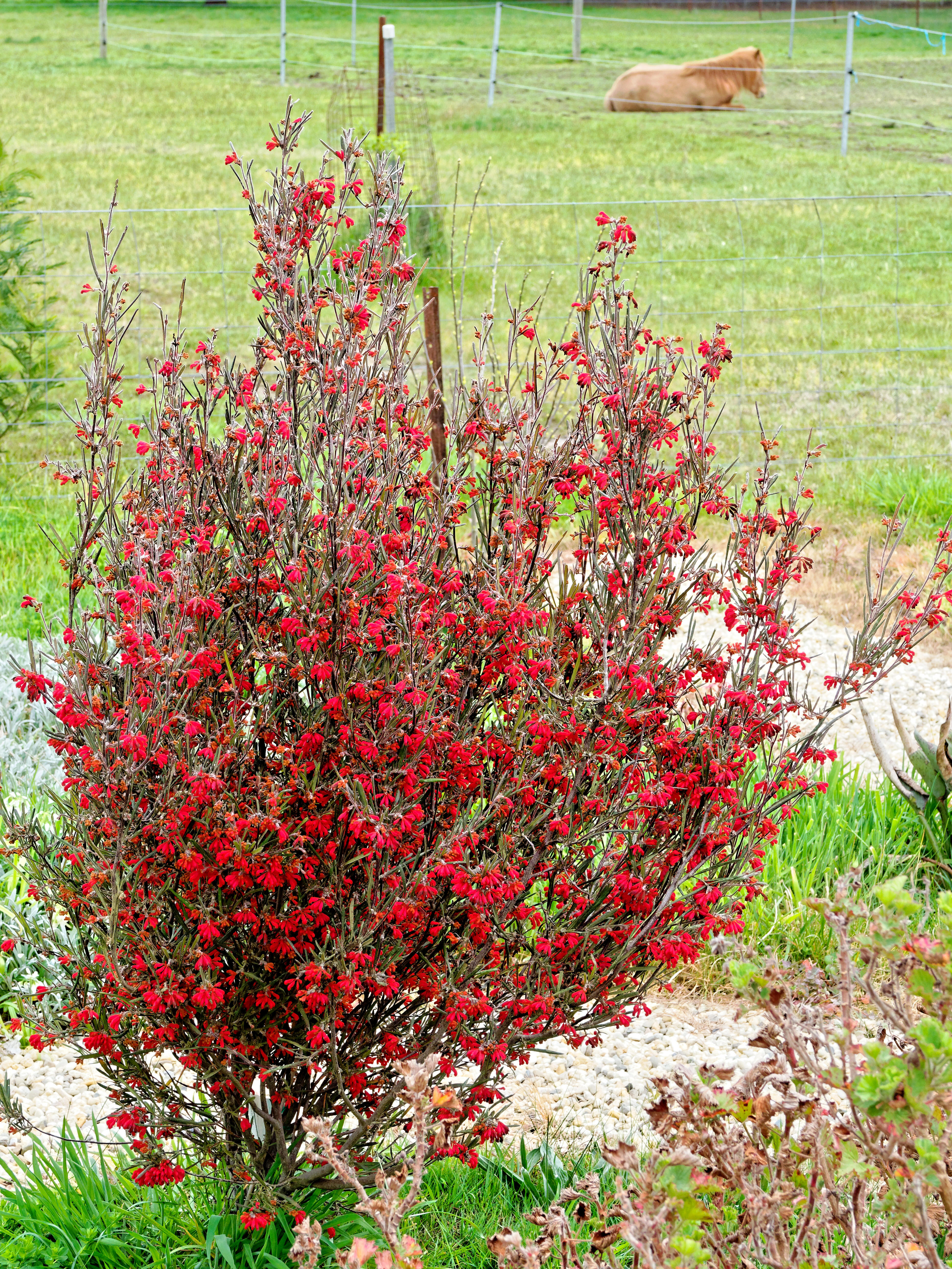 This should be Grevillea-2.jpeg.  Is it missing?
