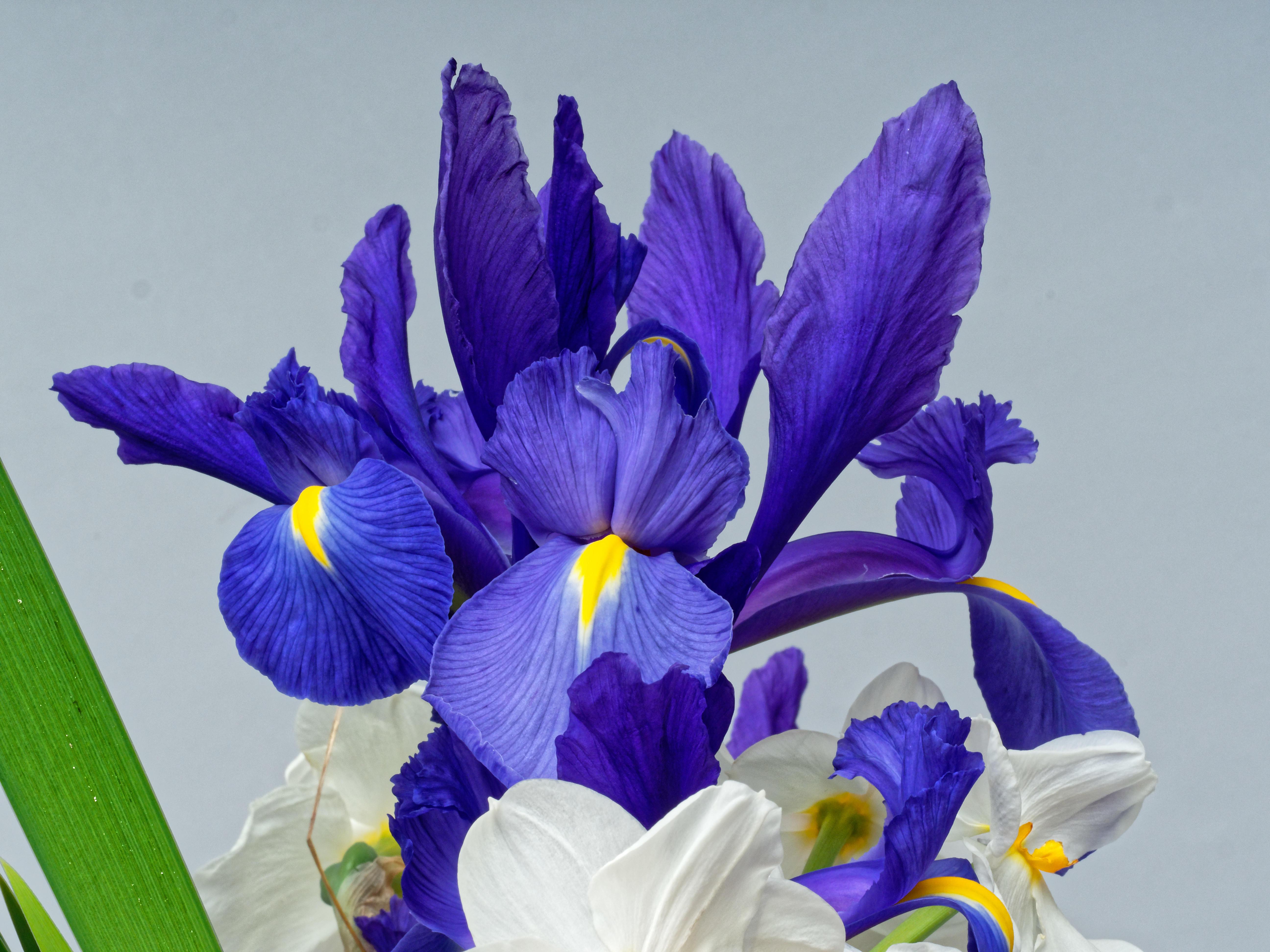 Bouquet-13.jpeg