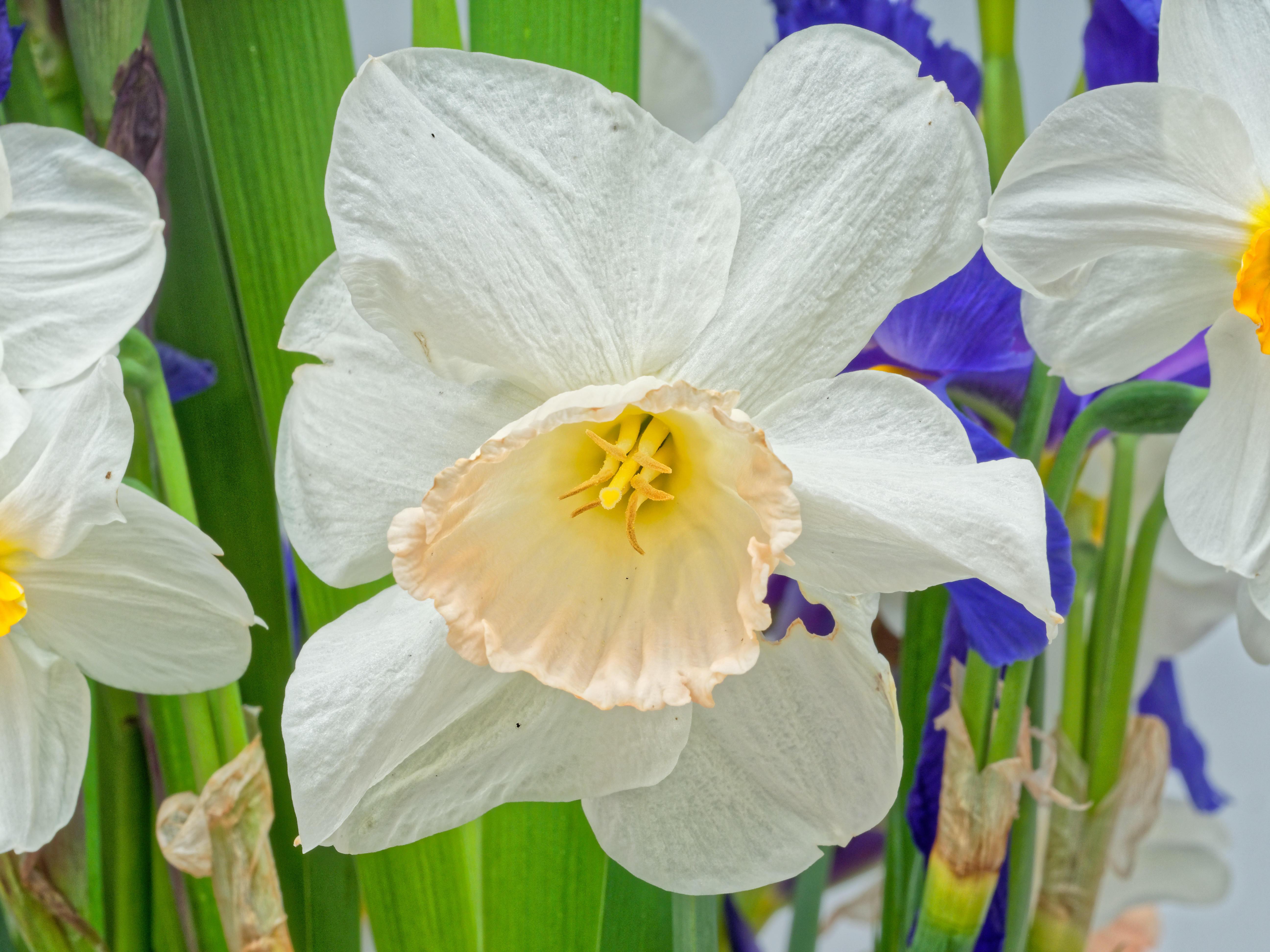 Bouquet-9.jpeg