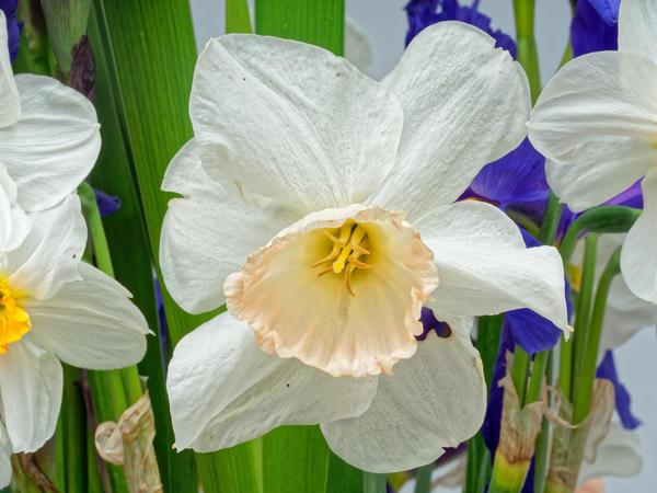 Bouquet-10.jpeg