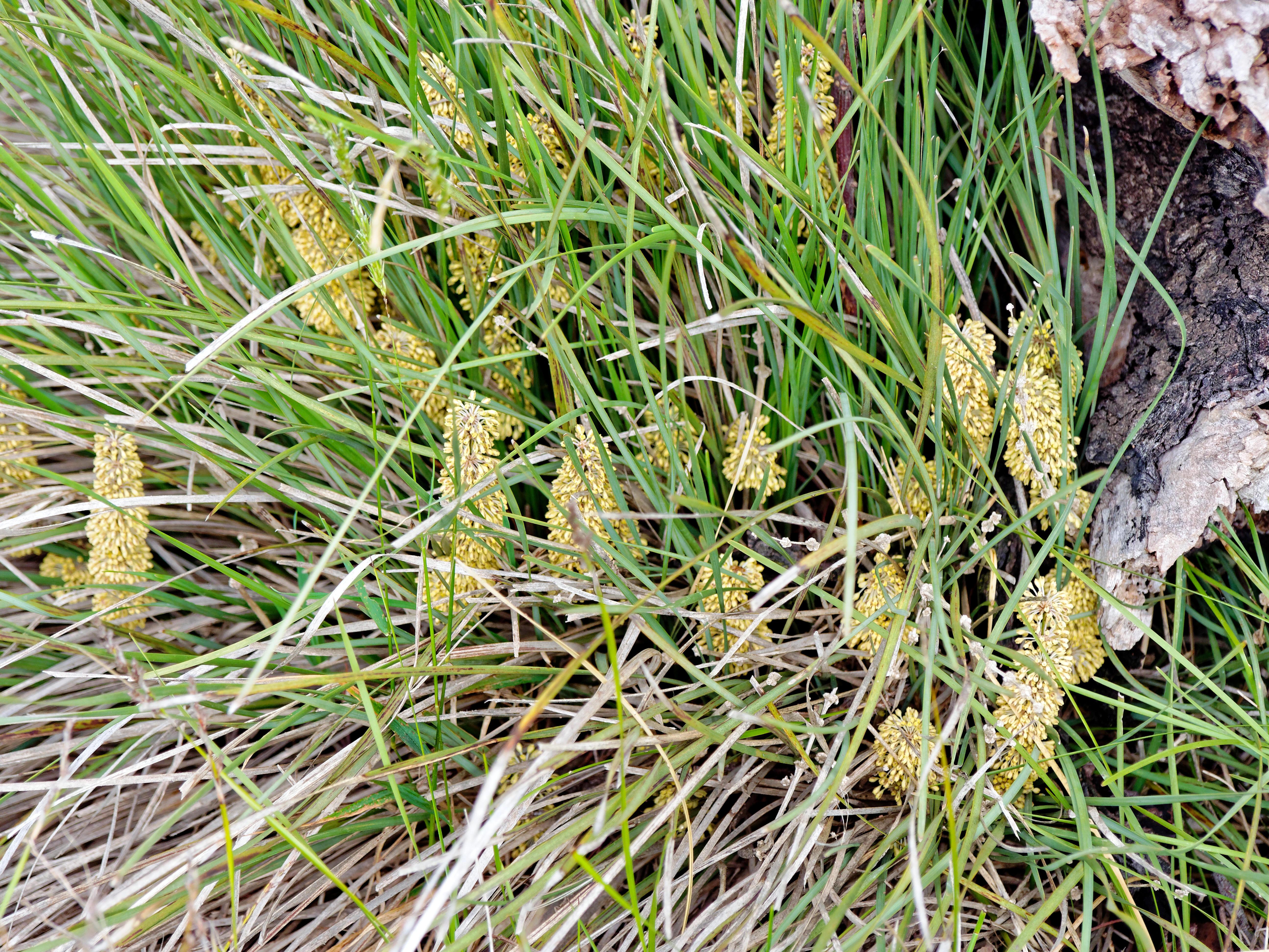 Grass-4.jpeg