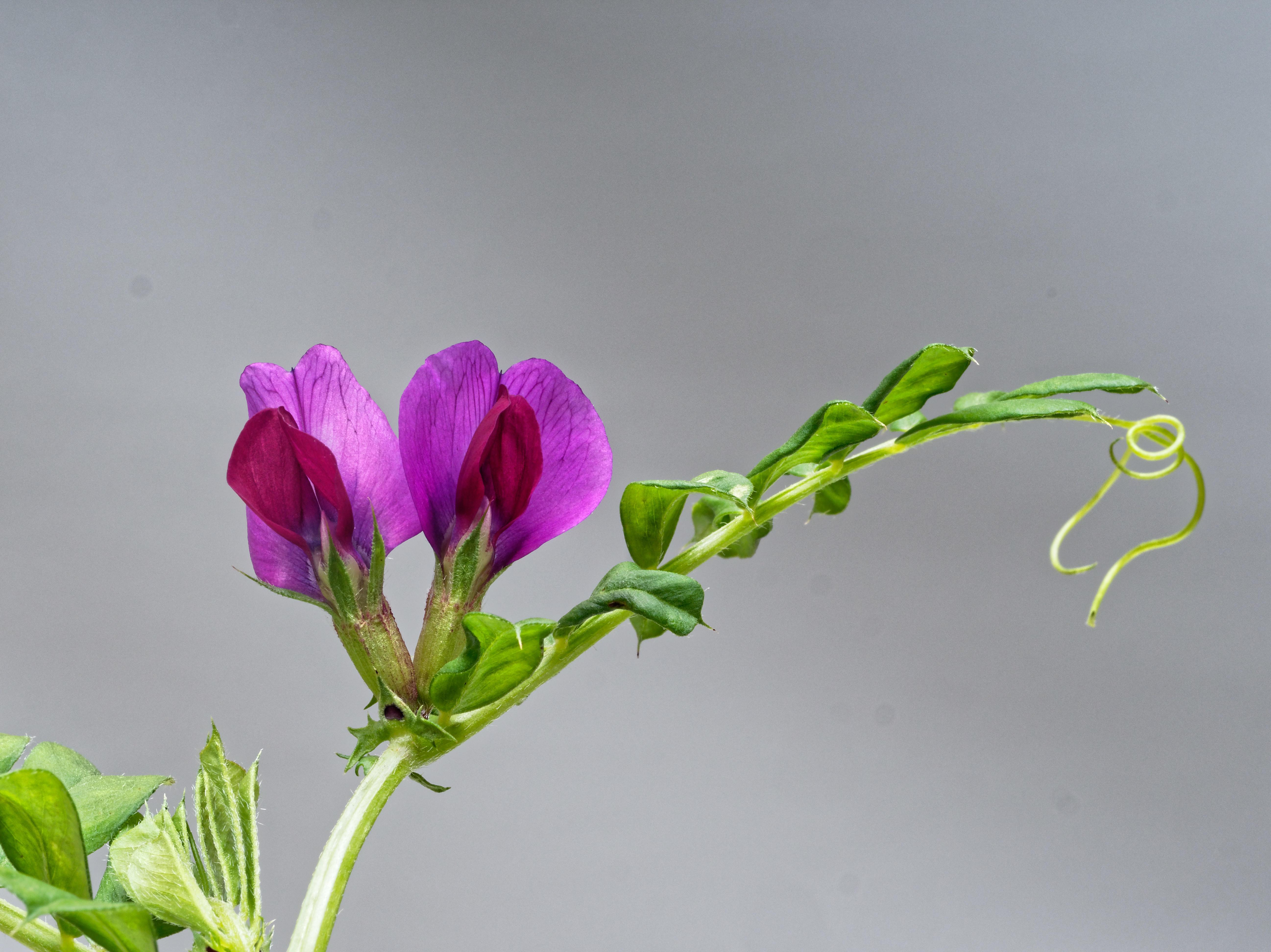 Mystery-plant-4.jpeg