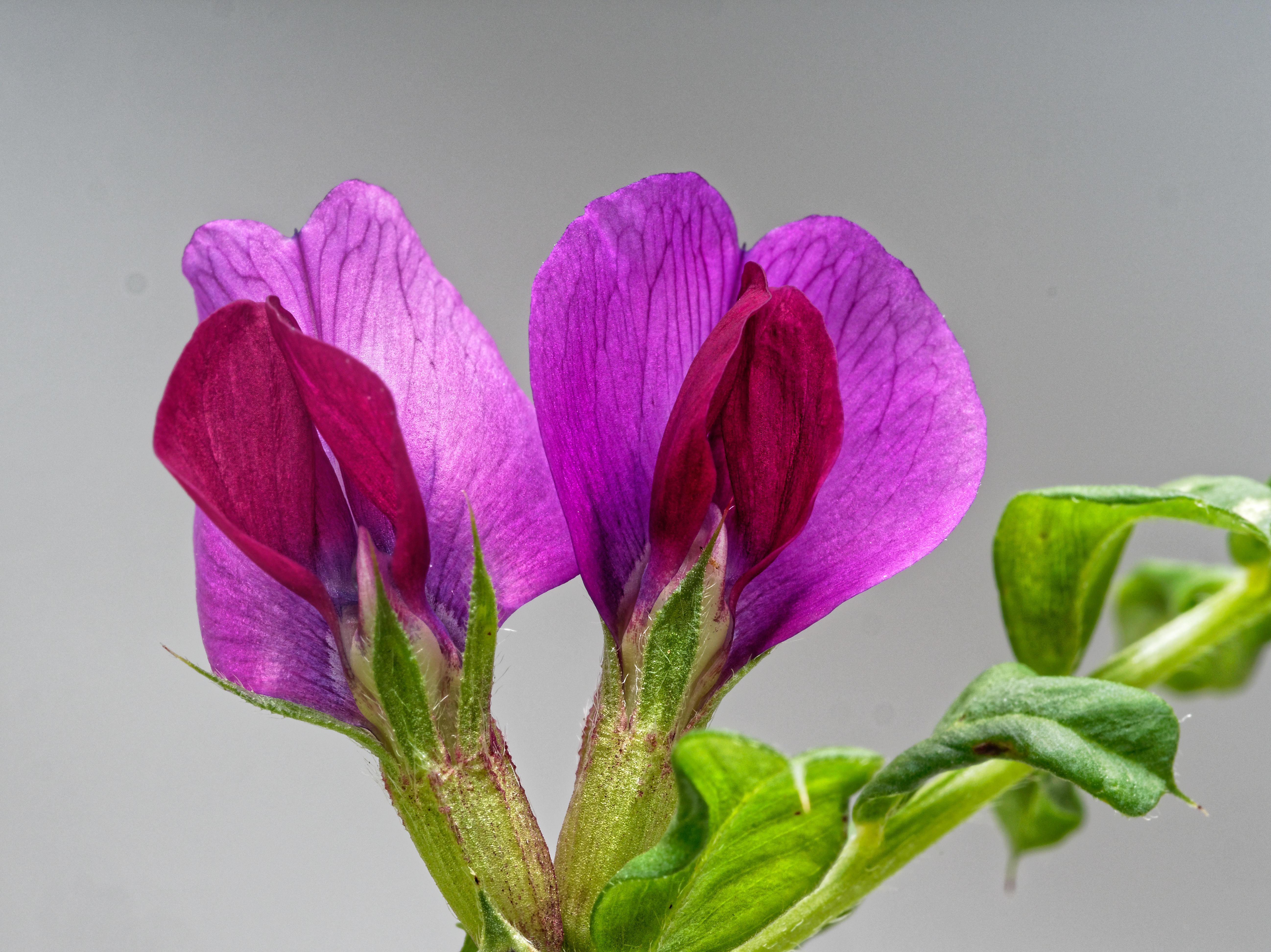Mystery-plant-5.jpeg