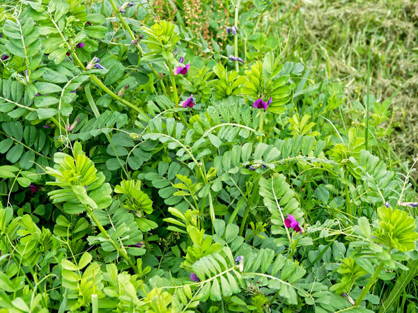Mystery-plant-1.jpeg