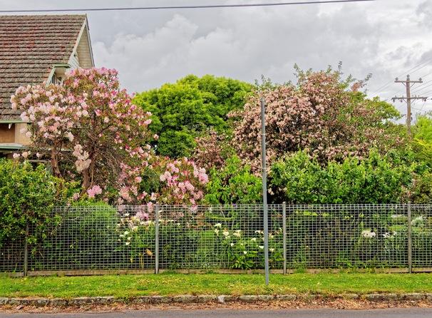 Flowering-bushes-1.jpeg