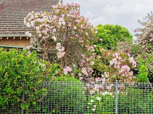 Flowering-bushes-2.jpeg
