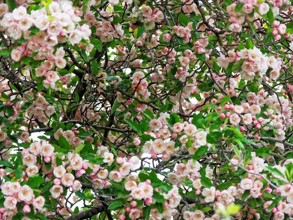 Flowering-bushes-4.jpeg
