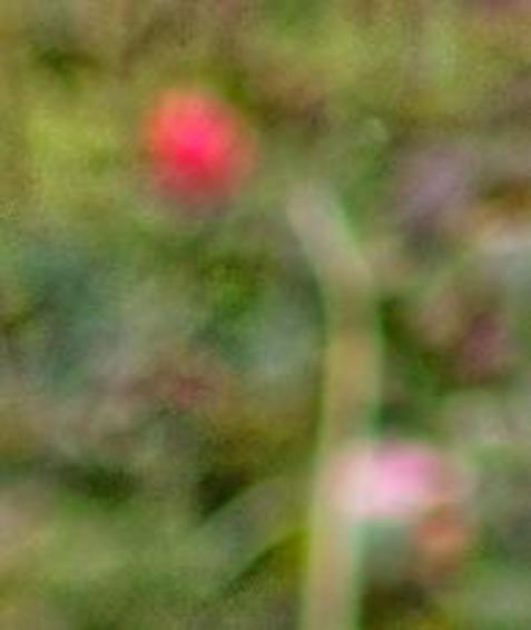 Nikon-85mm-1.4-5-detail.jpeg
