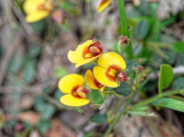 Wildflower-10.jpeg