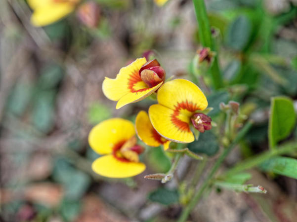 Wildflower-13.jpeg