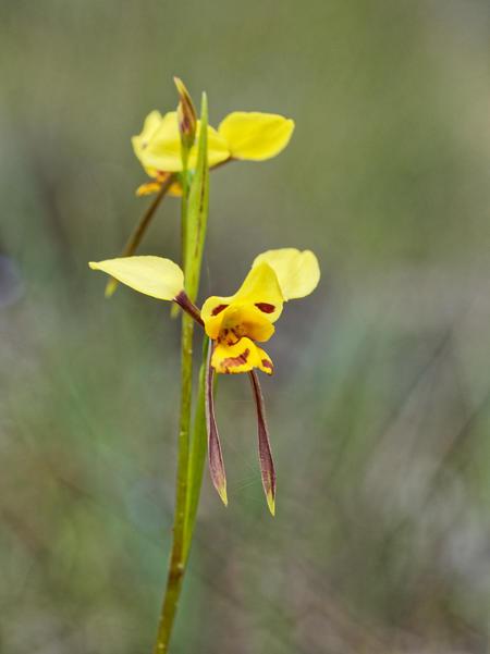 Wildflower-15.jpeg
