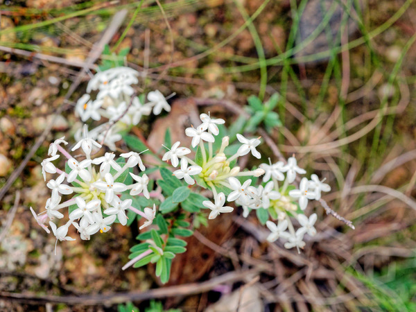Wildflower-17.jpeg