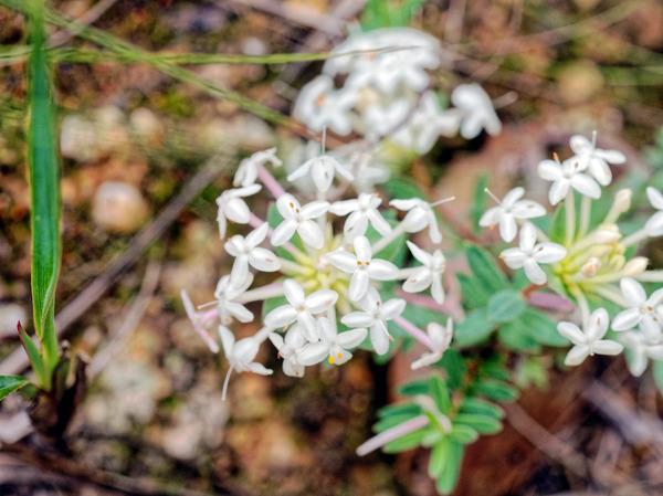 Wildflower-18.jpeg