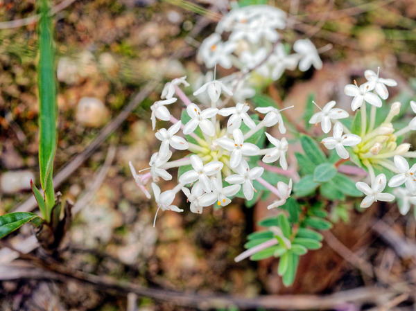 Wildflower-19.jpeg