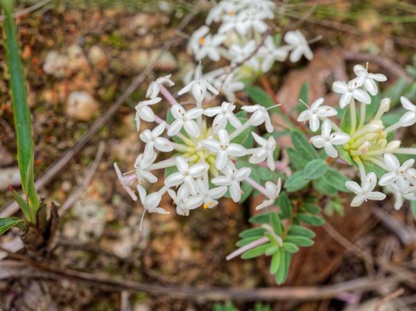 Wildflower-22.jpeg