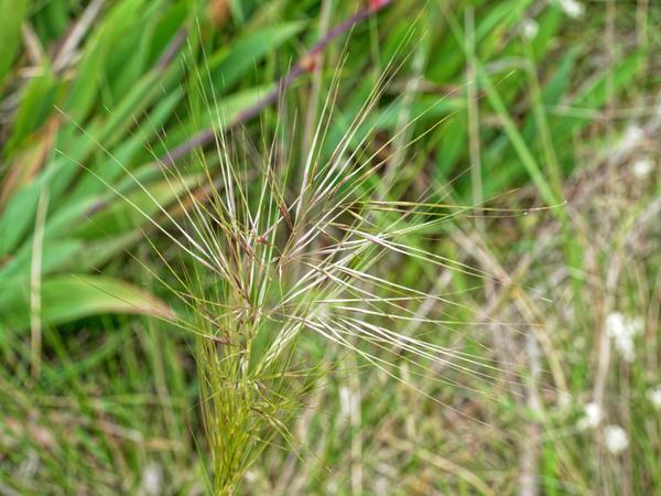 Grass-5.jpeg