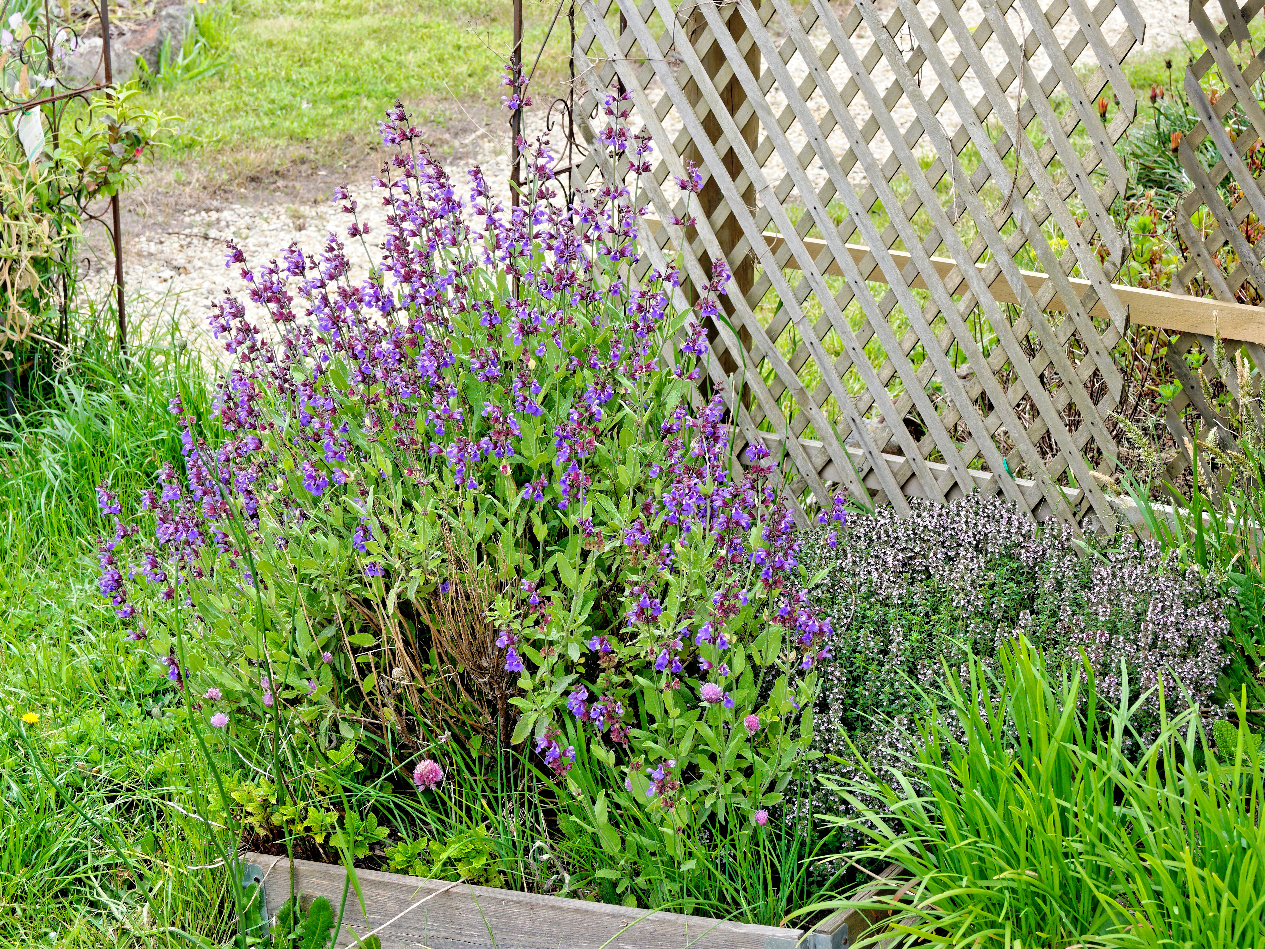 This should be Sage-thyme.jpeg.  Is it missing?