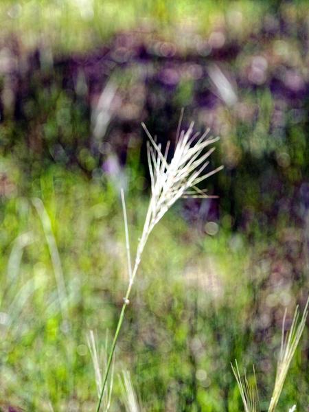Grass-3.jpeg