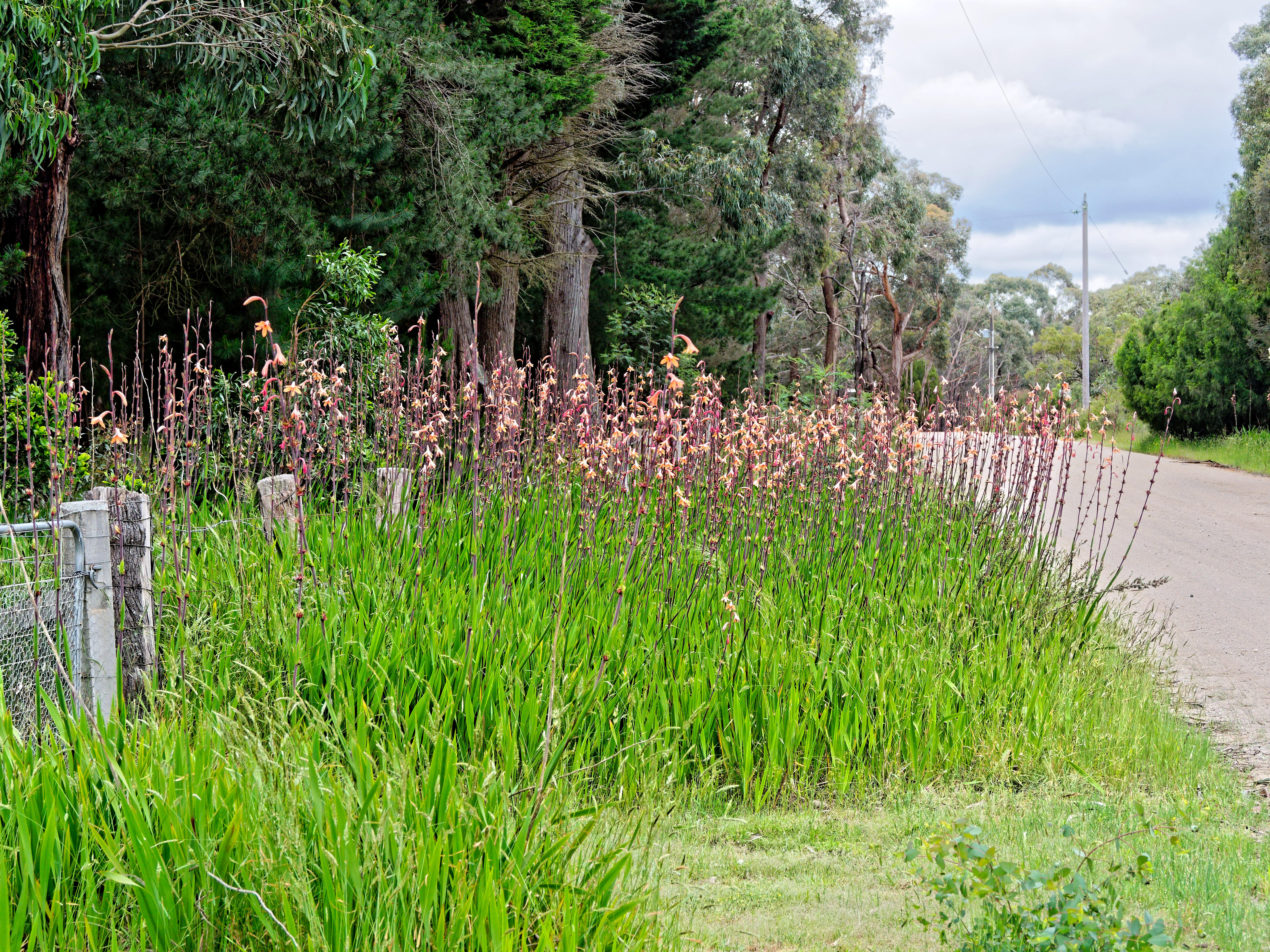 This should be Watsonia.jpeg.  Is it missing?
