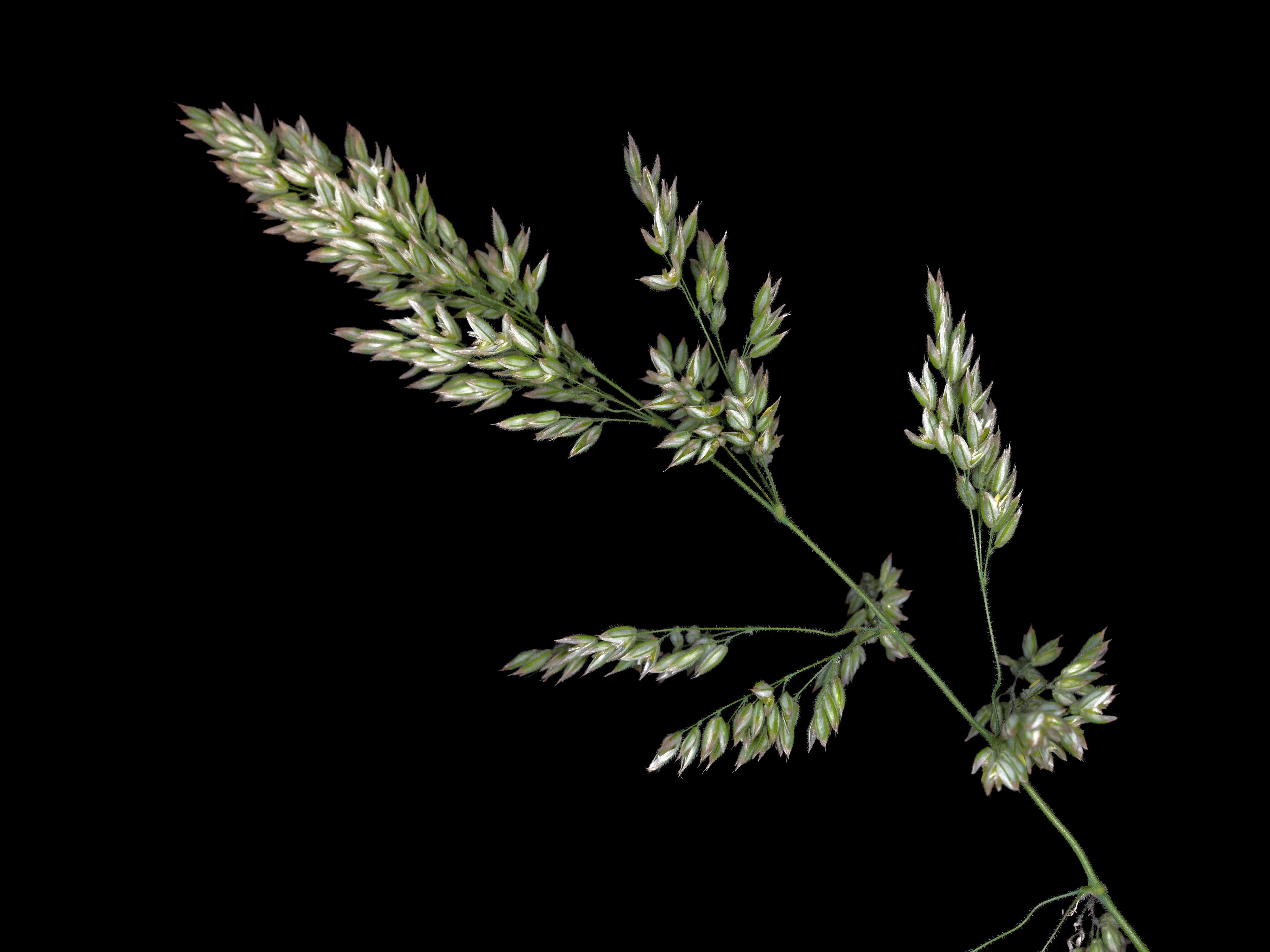 Grasses-10.jpeg