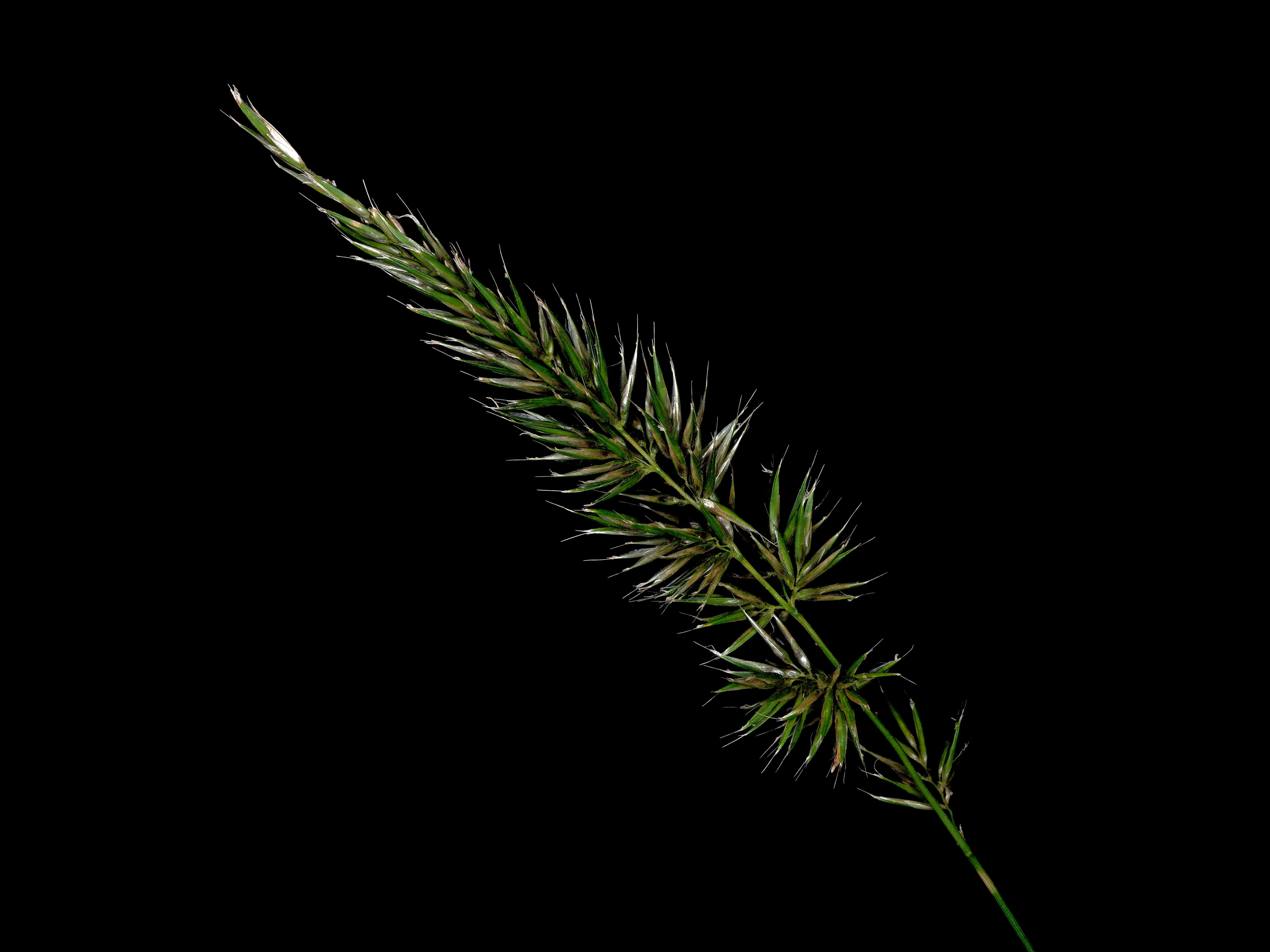 Grasses-12.jpeg