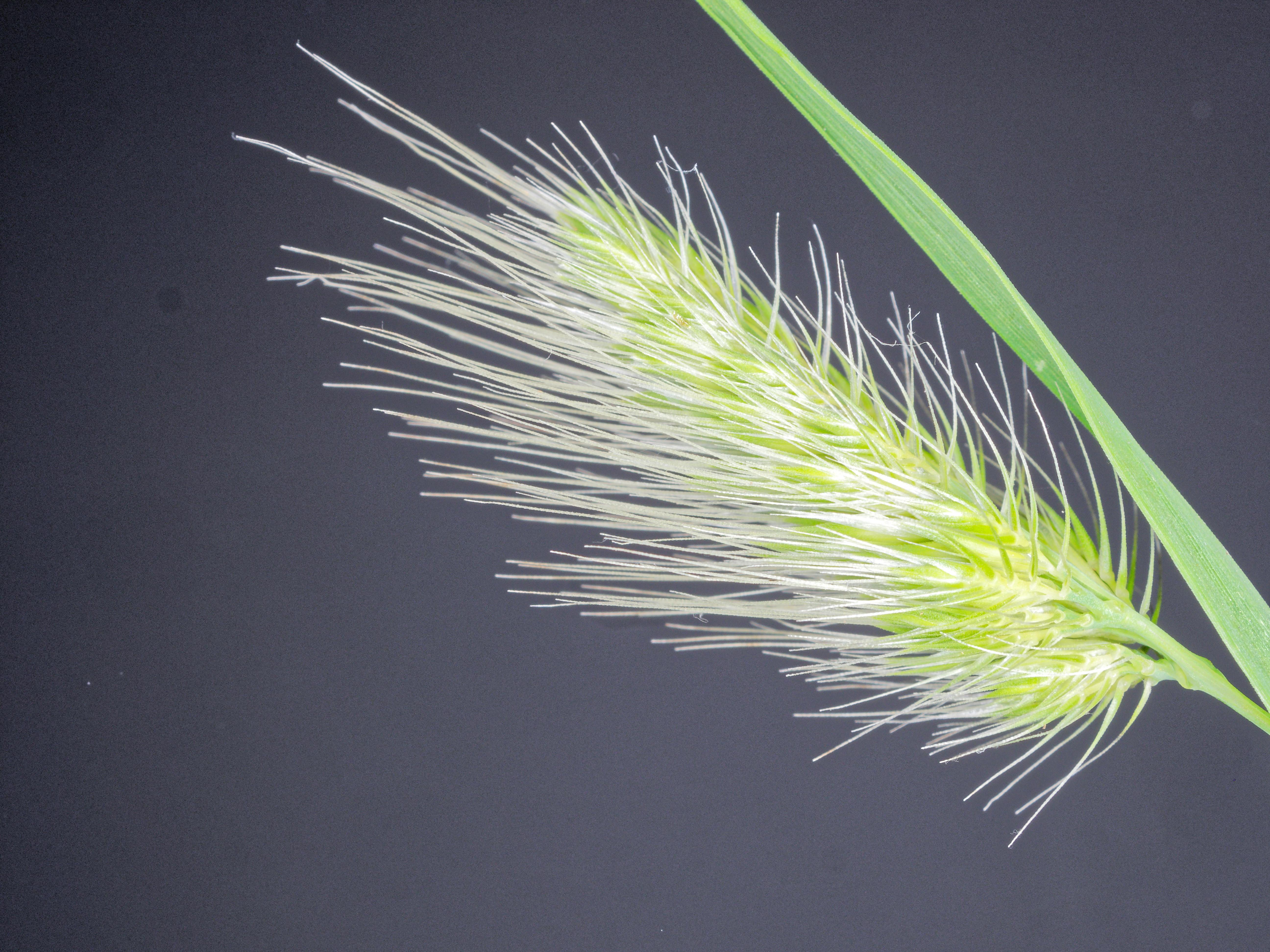 Grasses-17.jpeg