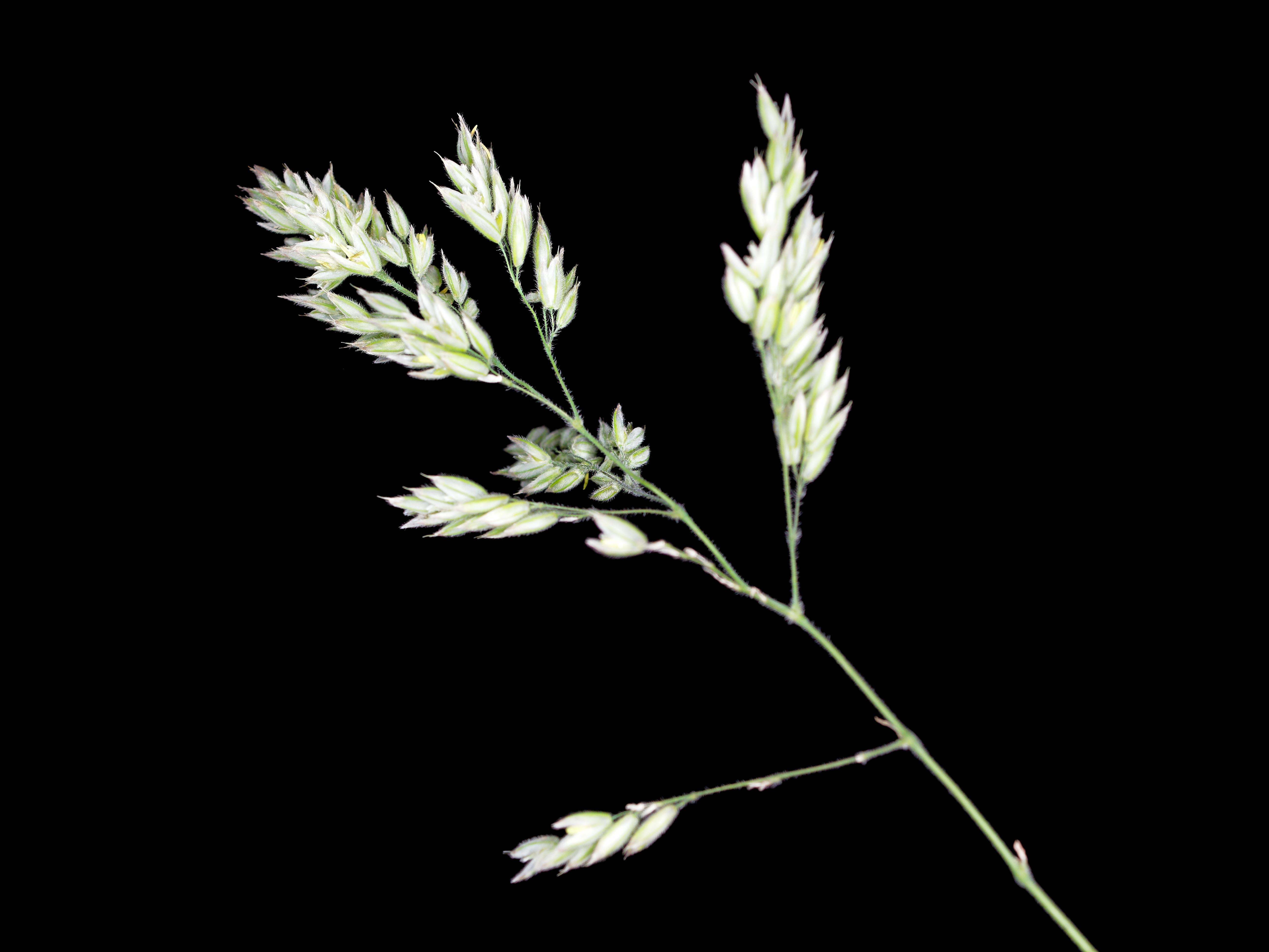 Grasses-8.jpeg