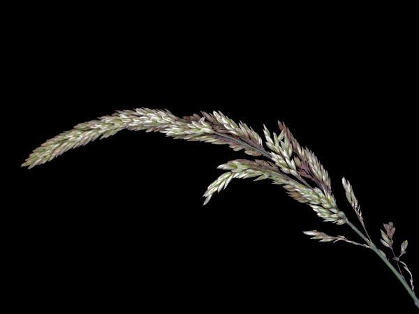 Grasses-11.jpeg