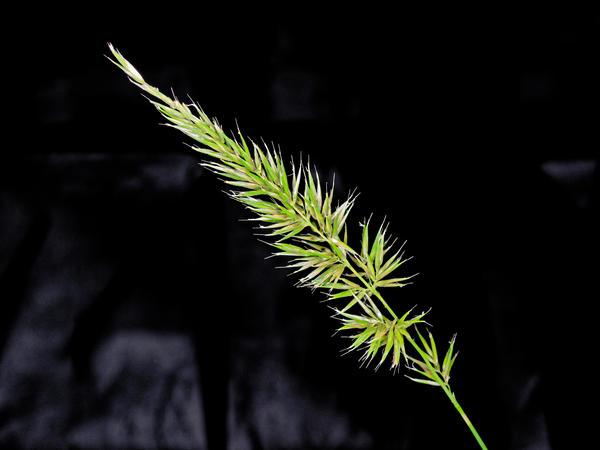 Grasses-14.jpeg