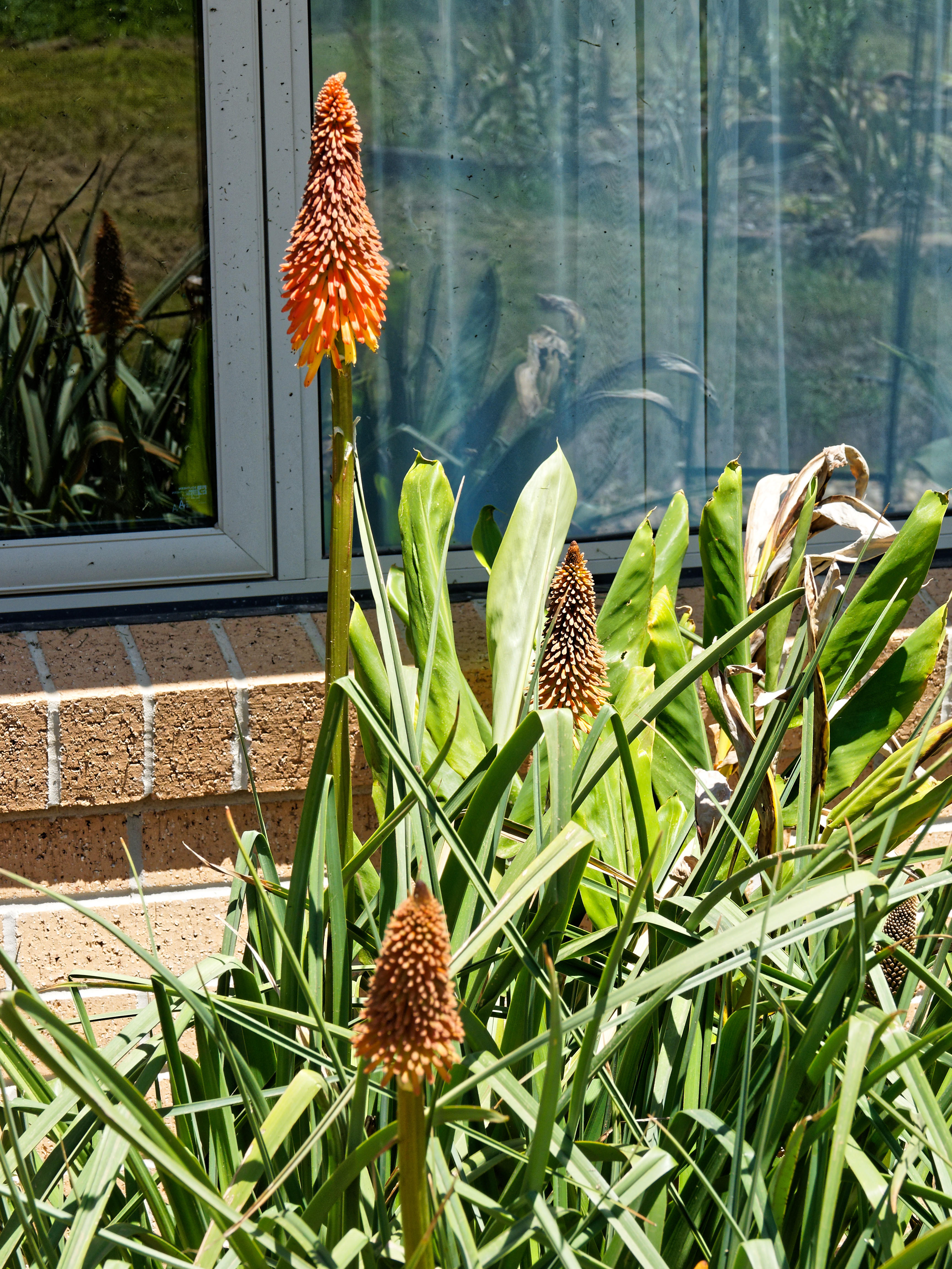 This should be Kniphofia-2.jpeg.  Is it missing?