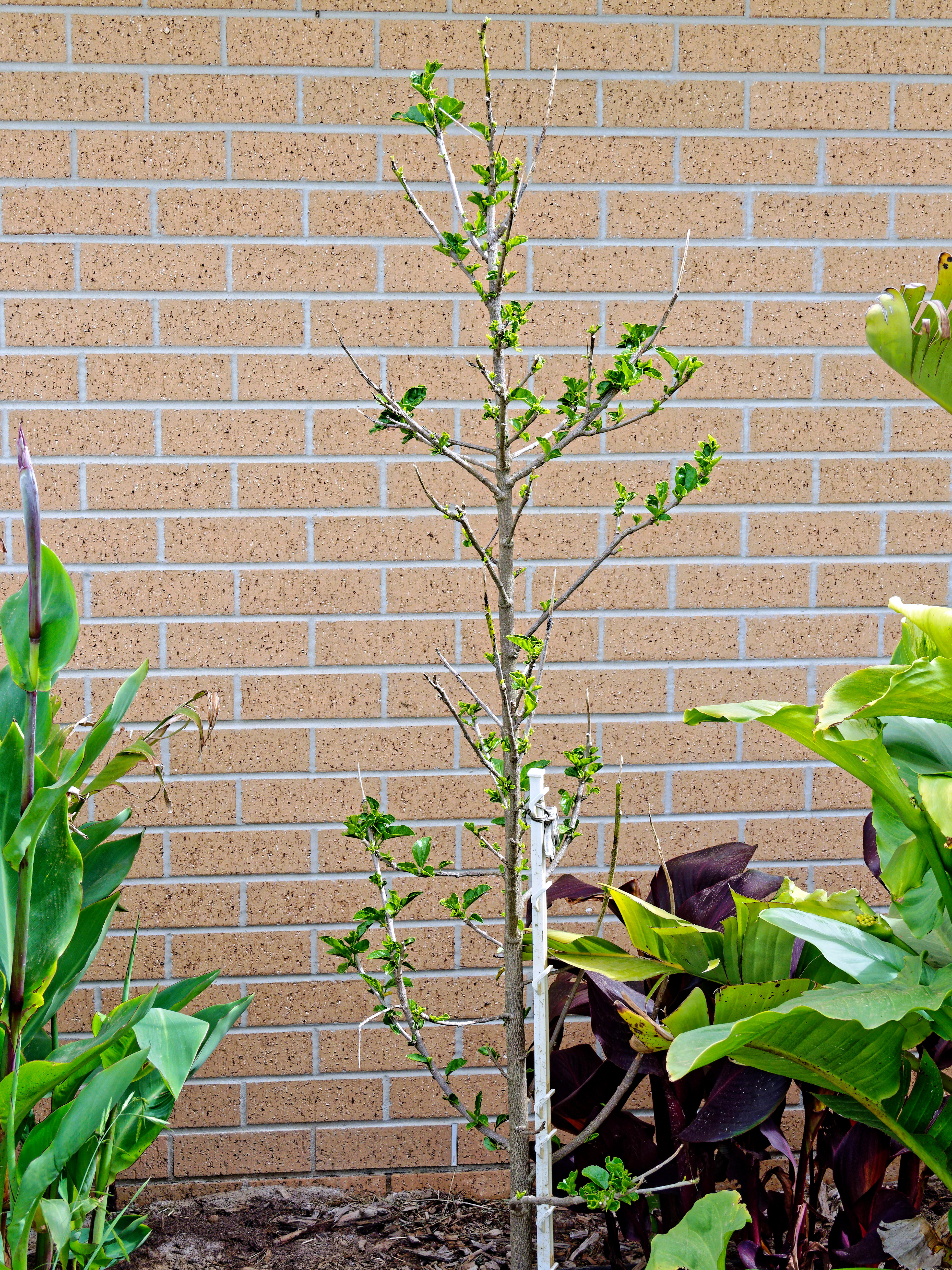This should be Hibiscus-rosa-sinensis.jpeg.  Is it missing?