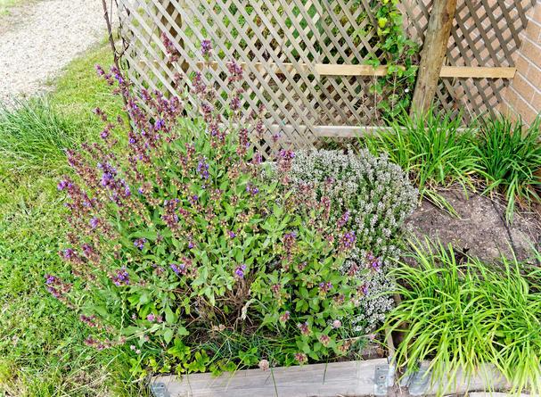 Herb-garden-1.jpeg