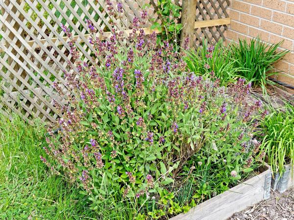 Herb-garden-2.jpeg