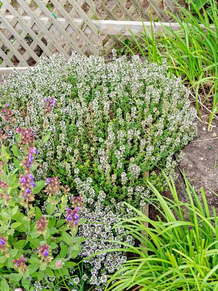 Herb-garden-3.jpeg
