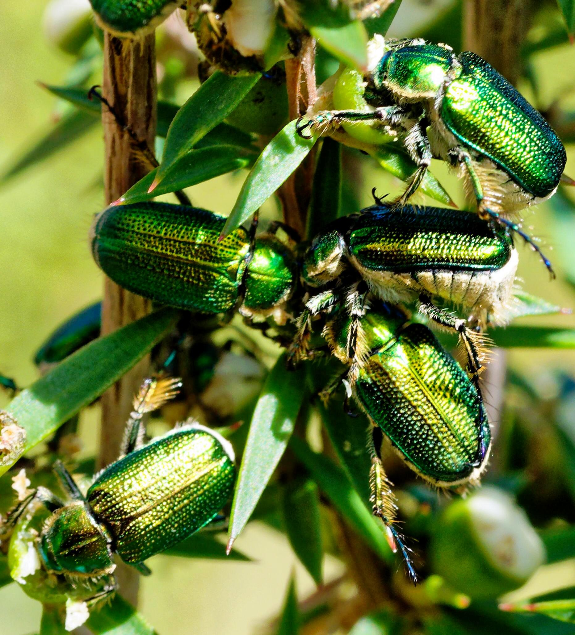 Beetles-12-detail.jpeg