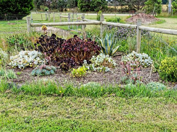 Succulent-bed-1.jpeg