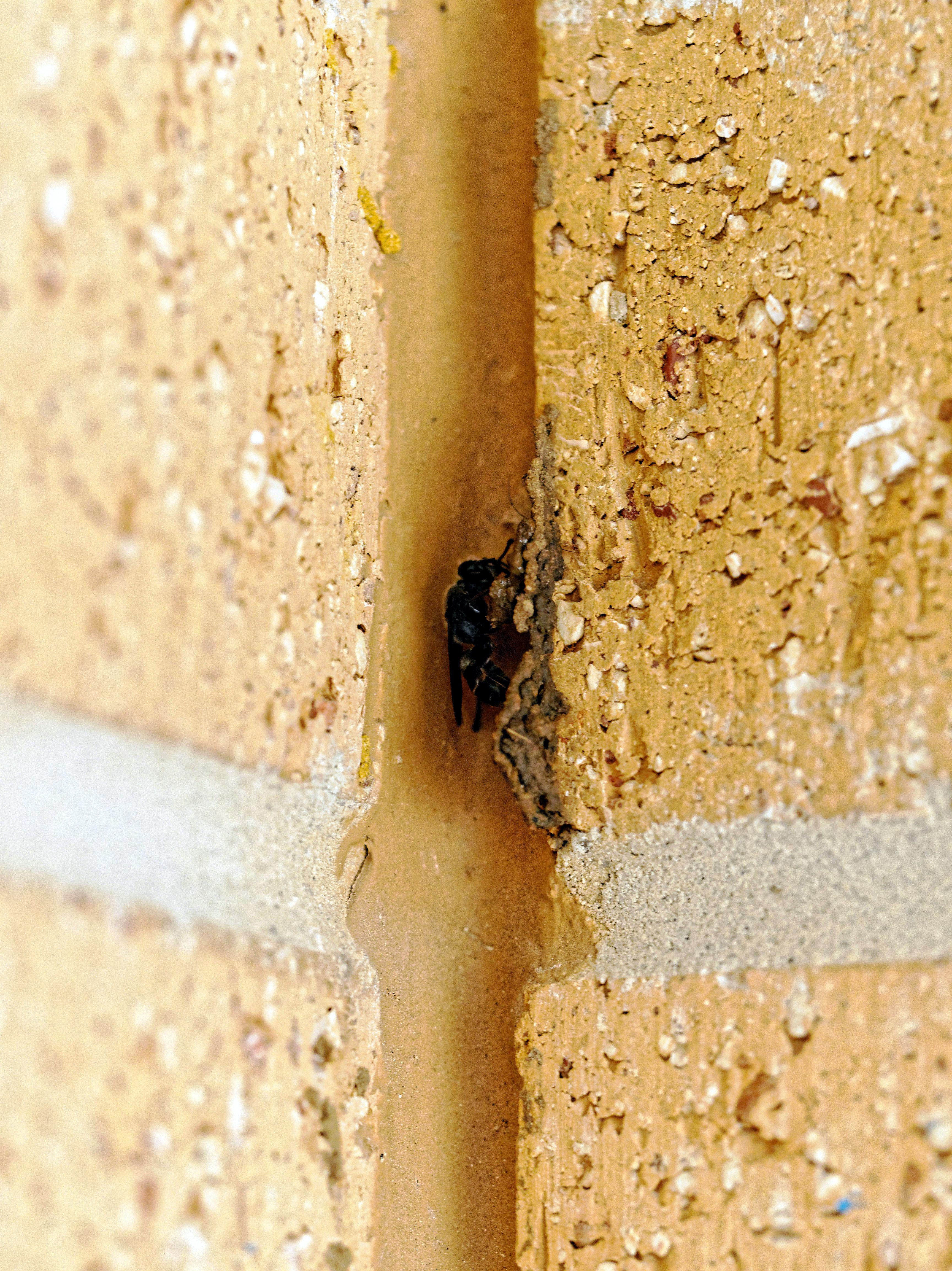Mud-wasp-6.jpeg