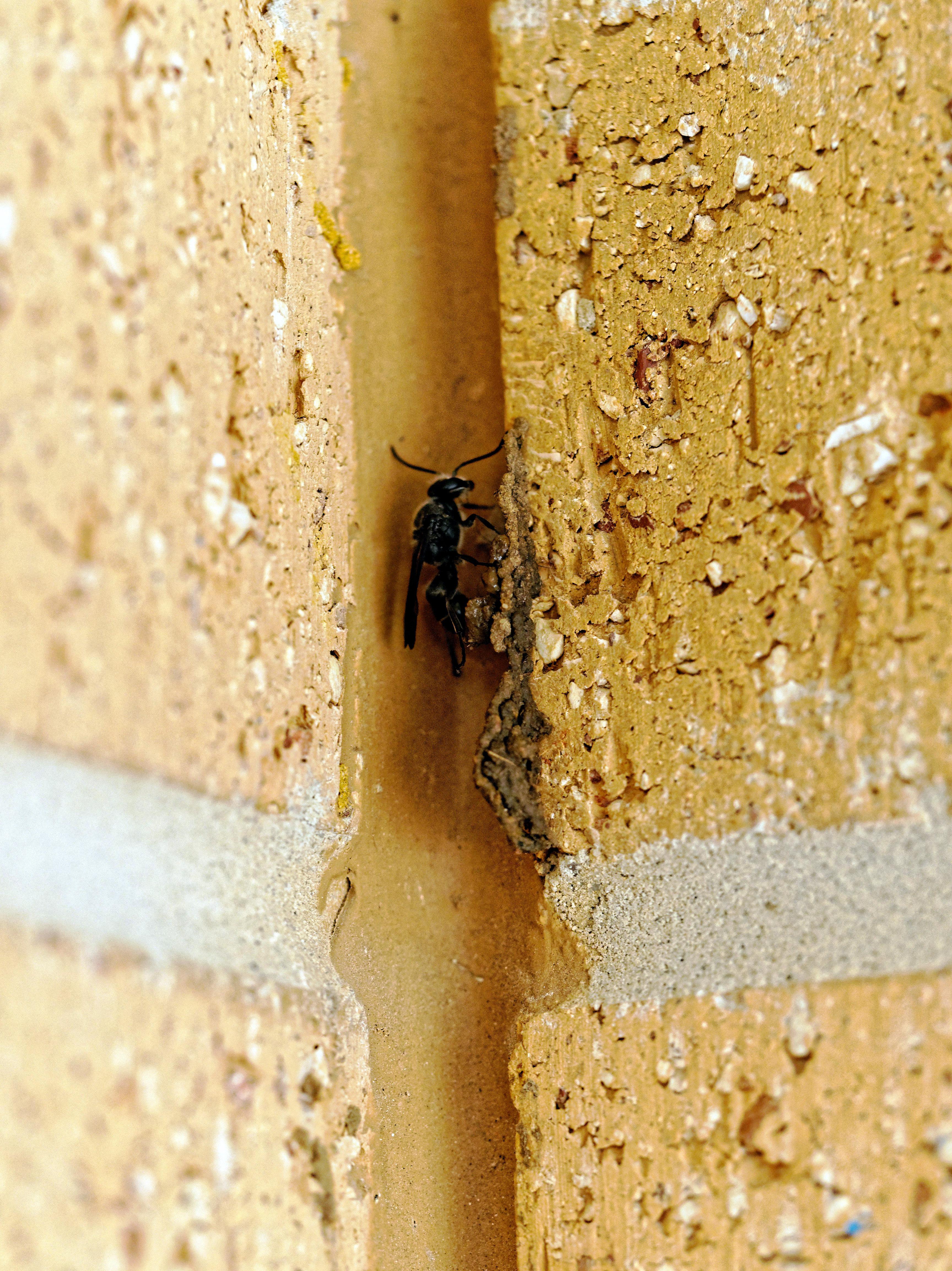 Mud-wasp-8.jpeg
