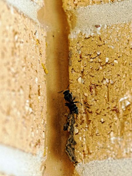 Mud-wasp-10.jpeg