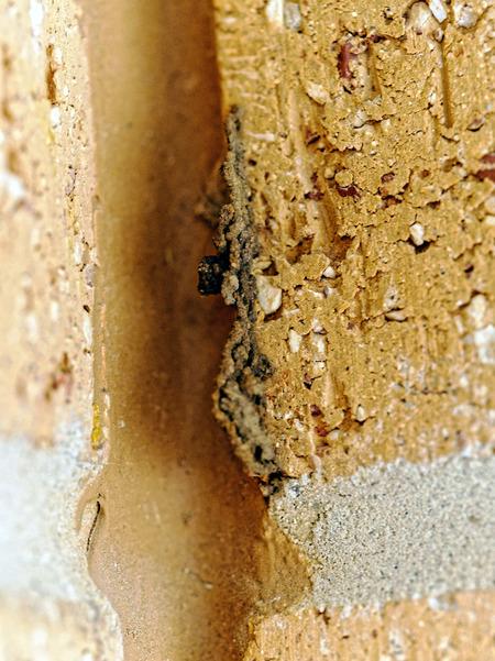 Mud-wasp-14.jpeg