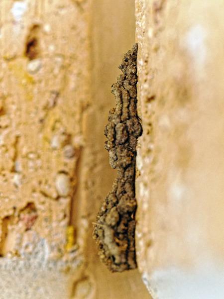 Mud-wasp-17.jpeg