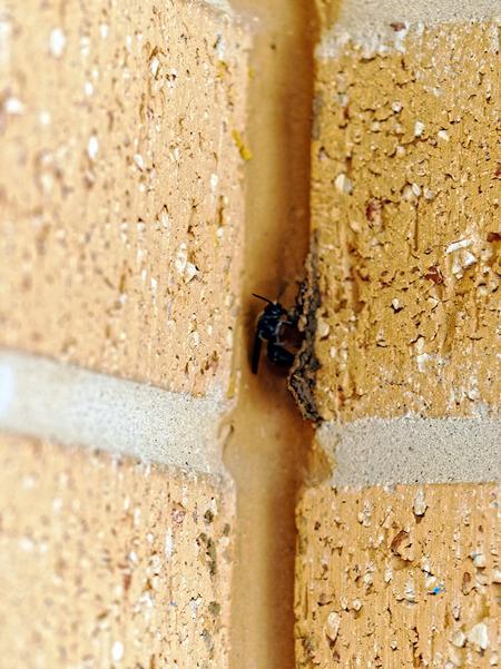 Mud-wasp-4.jpeg