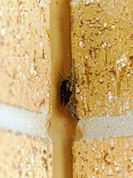 Mud-wasp-7.jpeg