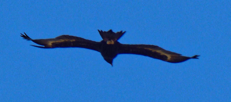 Eagle-1.jpeg