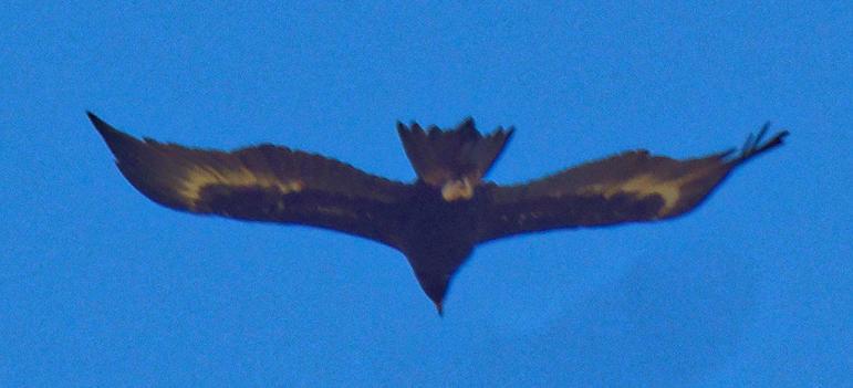 Eagle-2.jpeg